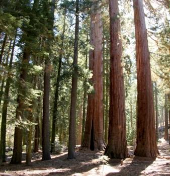 California Giants & Florida Triumphs: Redwoods & Everglades